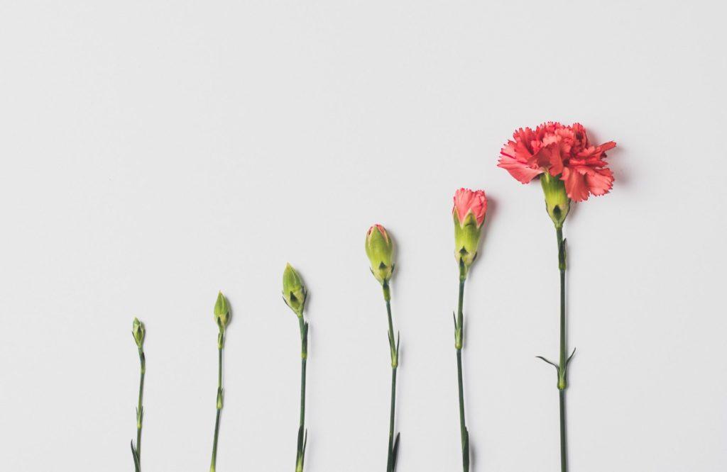 背の順で並ぶ花